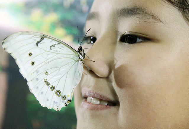 """A young girl poses with a Morpho Polyphemus  butterfly during a butterfly exhibition in Bishkek, Kyrgyzstan, 09 January 2015. According to local reports the exhibition """"Happy Tropics"""" opened 30 December 2014 and runs until 09 February 2015 and includes a number of colorful and rare butterfly species. (Photo by Igor Kovalenko/EPA)"""