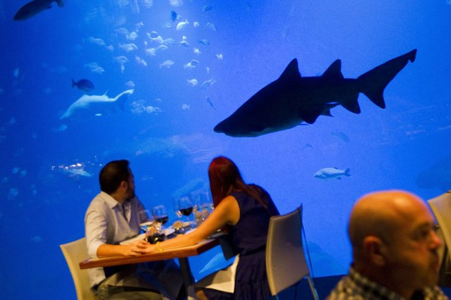 People enjoy a dinner past the Big Blue, the deepest shark tank in Europe at the Palma Aquarium in Palma de Mallorca, on July 20, 2013. (Photo by Jaime Reina/AFP Photo)