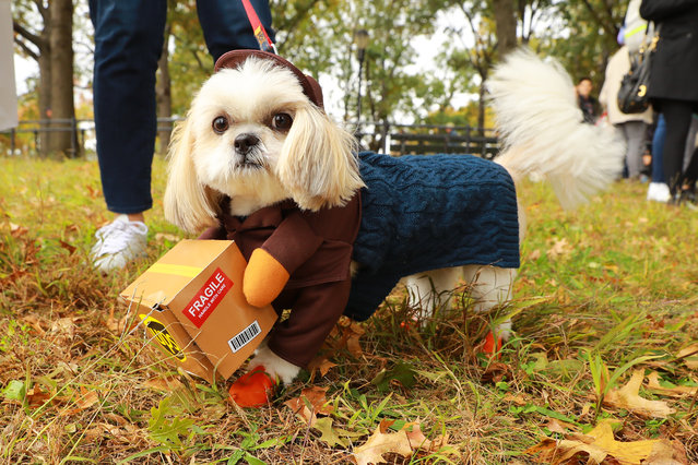 A dog dressed as UPS worker is seen during the 28th Annual Tompkins Square Halloween Dog Parade at East River Park Amphitheater in New York on October 28, 2018. (Photo by Gordon Donovan/Yahoo News)