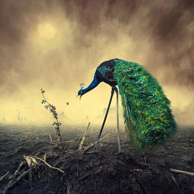 """No bird's land"". (Photo by Ionut Caras)"