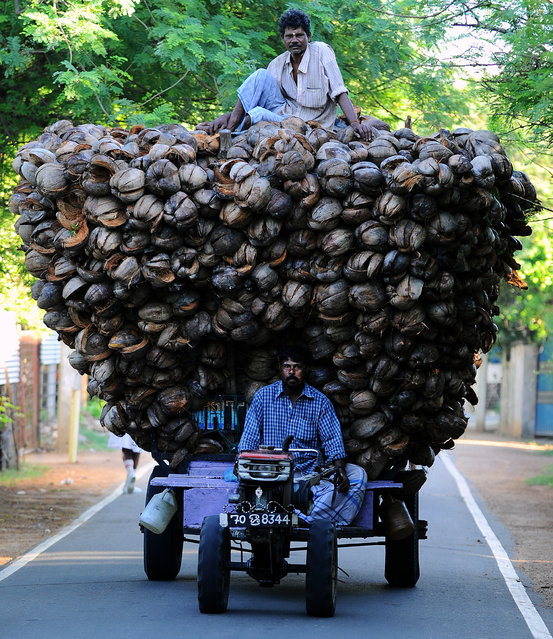 Sri Lankan Tamil farmers transport coconut husk in Jaffna, 400 kilometres (250 miles) north of the capital Colombo on November 18, 2013.  Commonwealth leaders signed agreements November 17 on issues such as poverty and development as they staged a show of unity after a summit in Sri Lanka dominated by a bitter dispute over war crimes. (Photo by Ishara S. Kodikara/AFP Photo)
