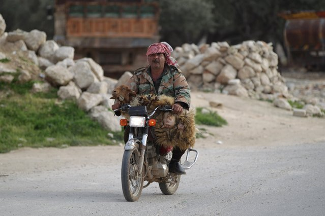 A man rides with a sheep on a motorbike in the town of Marat Numan in Idlib province, Syria, Syria March 19, 2016. (Photo by Khalil Ashawi/Reuters)