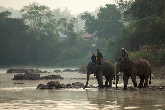 Mahouts bath elephants in Houng River before taking part in an elephant festival, which organisers say aims to raise awareness about elephants, in Sayaboury province, Laos February 17, 2017. (Photo by Phoonsab Thevongsa/Reuters)
