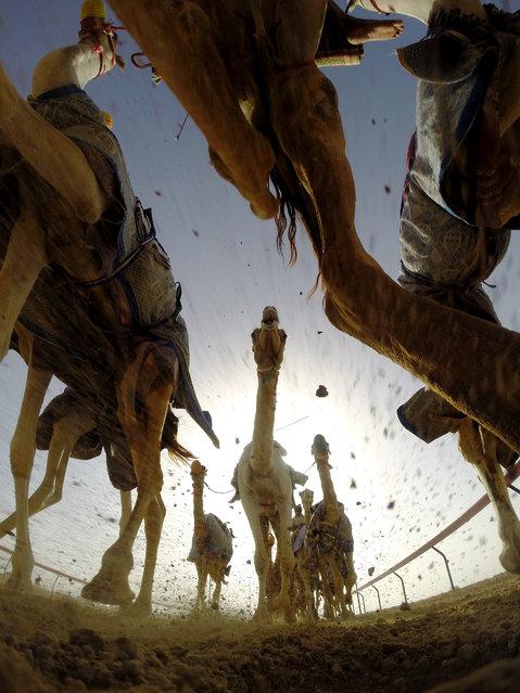"""Al-Marmoum Racetrack"". Shot taken at Al-Marmoum Camel Racetrack in Dubai. Photo location: Dubai, United Arab Emirates. (Photo and caption by Shoayb Khattab/National Geographic Photo Contest)"