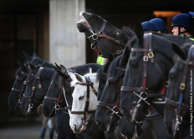 A horse of The Household Cavalry Mounted Regiment (HCMR) rears it's head during parade at Hyde Park Barracks
