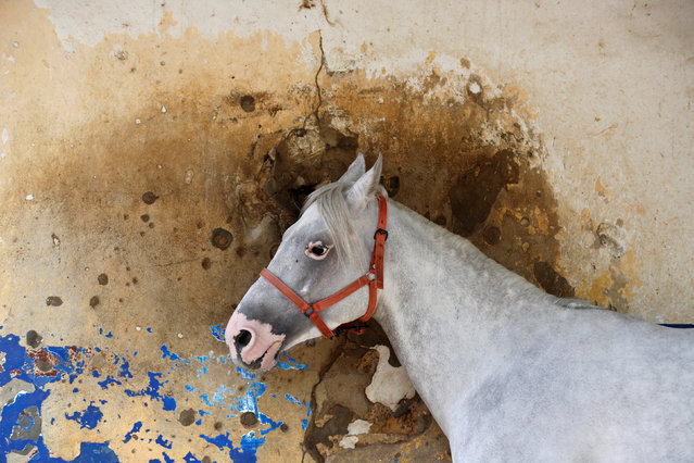 A horse stands in front a bullet-riddled wall at Beirut Hippodrome, Lebanon, April 30, 2017. (Photo by Jamal Saidi/Reuters)