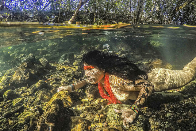 "These images offer a rare glimpse of life within remote Brazilian tribes. Taken by photographer Ricardo Stuckert the stunning snaps show women diving underwater and surviving in modern society.  Ricardo spent time with the indigenous people to help document what life is really like for the community. In 2015, he began to photograph native Brazilians to make a historical record for his book Brazilian Indians. Award winning photographer Ricardo, 47, said: ""The pictures show the traditional way of life of these people who live in harmony with nature. The photos provide an overview of the contemporary situation of the indigenous people in Brazil"". Here: Akuku Kamaiur during a diving in the So Miguel river. Chapada dos Veadeiros, state of Gois, Brazil on July 17, 2016 .(Photo by Ricardo Stuckert/Caters News Agency)"