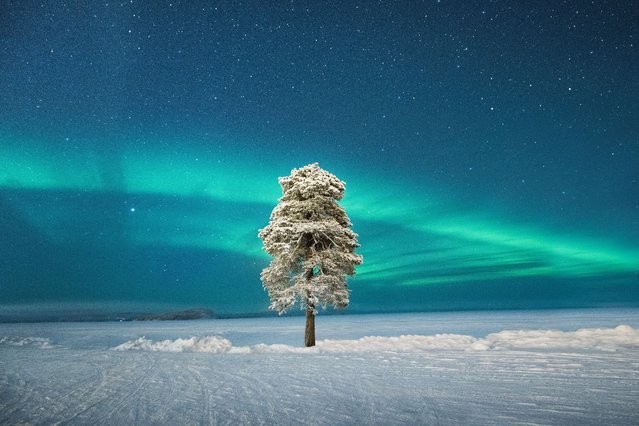Aurorae category runner-up: Lone Tree under a Scandinavian Aurora by Tom Archer (UK). The photographer decided to explore the area around the hotel on a very crisp -35C evening in Finnish Lapland. When he found this tree, he decided to wait for the misty conditions to change and could not believe his luck when the sky cleared and the aurora came out in the perfect spot. Archer spent about an hour photographing it before his camera started to lock up because of the harsh conditions, but by then he was happy to call it a night. (Photo by Tom Archer/2020 Astronomy Photographer of the Year)