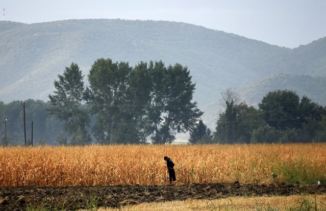 A migrant uses a field as a toilet at the Greek-Macedonian border near the Greek village of Idomeni August 22, 2015. Thousands of refugees and migrants camped in no man's land waiting to cross the border. (Photo by Yannis Behrakis/Reuters)