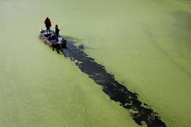 Fishermen stand on a boat on the Sevre Nantaise River that is covered by duckweed in Vertou, France, October 4, 2016. (Photo by Stephane Mahe/Reuters)