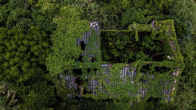 This aerial picture taken on May 31, 2018 shows an abandoned village house covered with overgrown vegetation in Houtouwan on Shengshan island, China' s eastern Zhejiang province. (Photo by Johannes Eisele/AFP Photo)