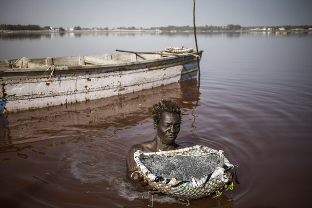 Toure, a Gambian salt harvester, holds a basket filled with  the salt collected from the crust of the bottom of the Lake Retba (Pink Lake) in Senegal on March 16, 2021. Lake Retba, divided from the Atlantic Ocean by a narrow corridor of dunes, owes its name to the pink waters caused by the Dunaliella salina algae and is known for its high salt content, up to 40% in some areas. (Photo by Marco Longari/AFP Photo)