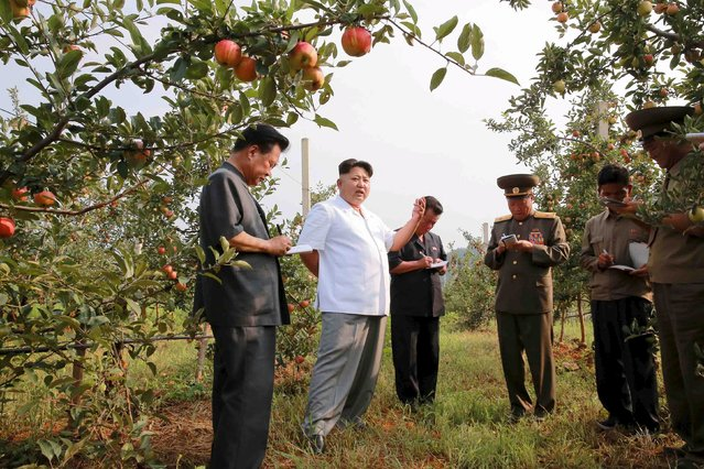 North Korean leader Kim Jong Un gives field guidance to the Taedonggang Combined Fruit Farm in this undated photo released by North Korea's Korean Central News Agency (KCNA) in Pyongyang August 19, 2015. (Photo by Reuters/KCNA)