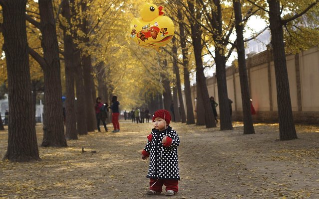 One-year-old Qiqi holds a ballon on a street outside Diaoyutai State Guesthouse in central Beijing, November 8, 2013. (Photo by Reuters/China Daily)