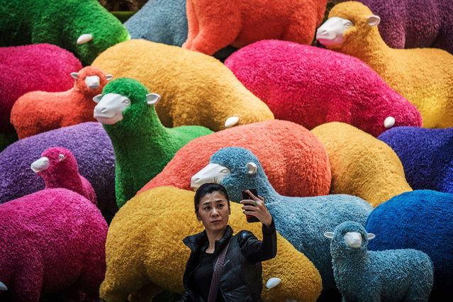 A woman takes a selfie in front of a multi coloured sheep installation displayed in a shopping mall for the Chinese New Year celebrations in Hong Kong on February 18, 2015. (Photo by Philippe Lopez/AFP Photo)