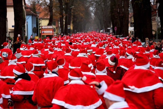 Participants compete in the 5th annual Michendorf Santa Run (Michendorfer Nikolauslauf) on December 8 in Michendorf, Germany. Over 900 people took part in this year's races. (Photo by Adam Berry/Getty Images)