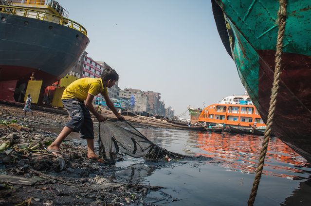 A boy looks for valuables thrown in the polluted waters of Buriganga river on January 22, 2016 in Dhaka, Bangladesh. Buriganga river, which flows by Dhaka, is one of the most polluted rivers in Bangladesh because of dumping of industrial dumping and human waste. Most of the riverbed is lost to encroachment and the remaining suffers from municipal and factory waste dumped through storm drains. More than 140 million people depend on the rivers for their livelihood and for transportation. (Photo by Shams Qari/Barcroft Images)