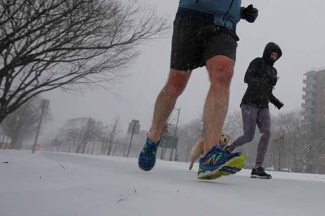 A jogger wearing shorts runs in the snow at the beginning of a winter nor'easter snow storm in Cambridge, Massachusetts, U.S. February 9, 2017. (Photo by Brian Snyder/Reuters)