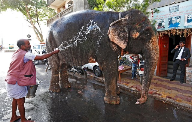 A mahout splashes water on his elephant on a hot summer day in Ahmedabad, India April 8, 2019. (Photo by Amit Dave/Reuters)