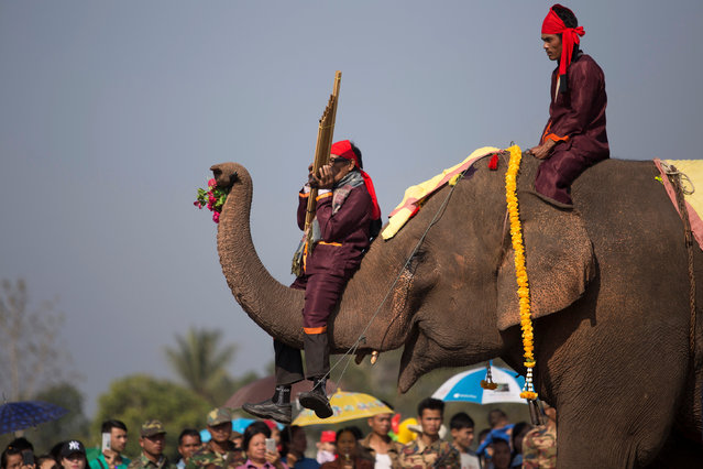 Elephants take part in the rehearsal before the opening of the elephant festival, which organisers say aims to raise awareness about elephants, in Sayaboury province, Laos February 17, 2017. (Photo by Phoonsab Thevongsa/Reuters)