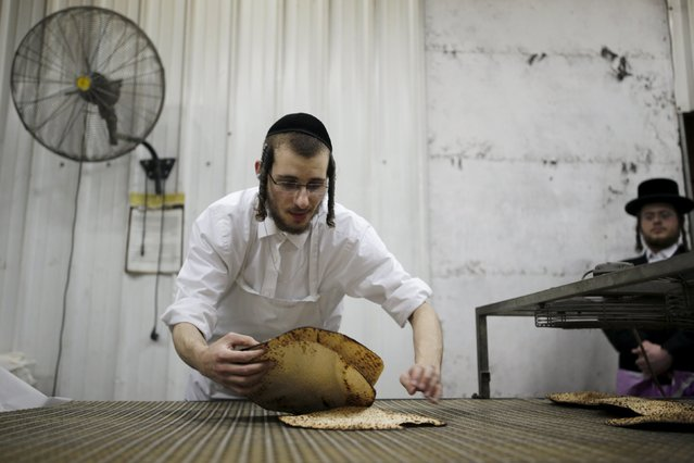 An ultra-Orthodox Jewish picks fresh matza, traditional unleavened bread eaten during the upcoming Jewish holiday of Passover, in the southern city of Ashdod April 17, 2016. (Photo by Amir Cohen/Reuters)