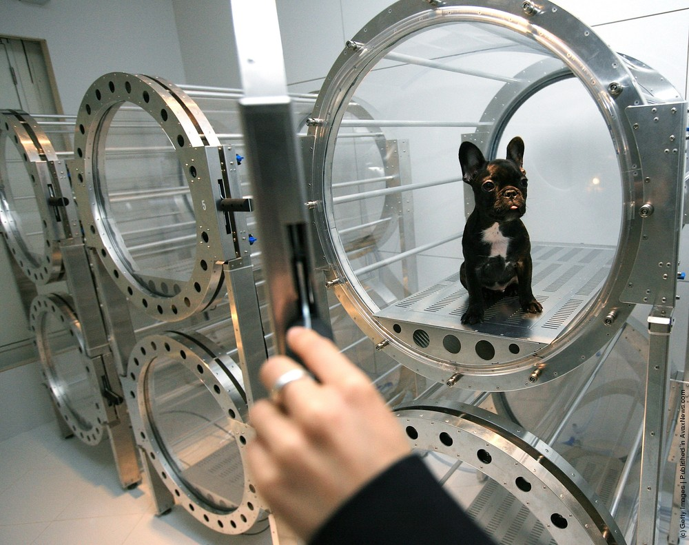Oxygen Capsules Used To Relax Pets