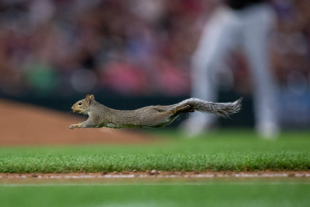 A squirrel runs across the field in the fifth inning in a game between the Minnesota Twins and Chicago White Sox at Target Field in Minneapolis, MN, USA on August 20, 2019. (Photo by Brad Rempel/USA TODAY Sports)