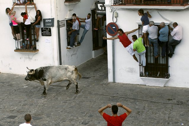"People hold onto windows to avoid a bull during the ""Toro de Cuerda"" (Bull on Rope) festival in Grazalema, southern Spain, July 20, 2015. Three bulls restrained by a rope are allowed to run through the streets of the village during the annual festival. (Photo by Jon Nazca/Reuters)"