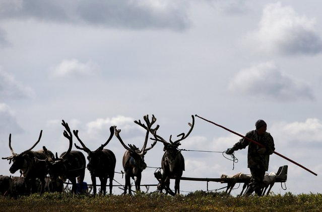 A herder works with reindeer at a camping ground, some 200 km (124 miles) northeast of Naryan-Mar, the administrative centre of Nenets Autonomous Area, far northern Russia, August 2, 2015. (Photo by Sergei Karpukhin/Reuters)