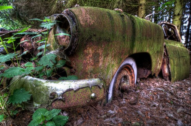 "A forest near Chatillion, a small village in Belgium, used to be home to a vintage car graveyard. This ""car graveyard"" has since been cleaned up, but photographer Theo van Vliet had the chance to explore the forest and photograph the cars beforehand. (Photo by Theo van Vliet)"