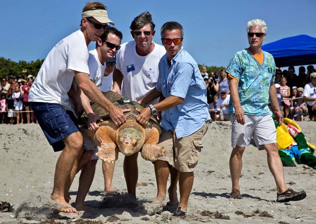 As Carl Stearns watches, Rick Linnell, Greg Lieberman, John Wolfenden and Billy Grundas carry Kahuna to the ocean on Juno Beach