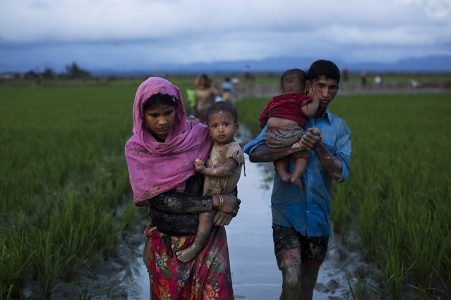 Myanmar's Rohingya ethnic minority members walk through rice fields after crossing over to the Bangladesh side of the border near Cox's Bazar's Teknaf area, Friday, September 1, 2017. Myanmar's military says almost 400 people have died in recent violence in the western state of Rakhine triggered by attacks on security forces by insurgents from the Rohingya. Advocates for the Rohingya, an oppressed Muslim minority in overwhelmingly Buddhist Myanmar, say hundreds of Rohingya civilians have been killed by security forces. Thousands have fled into neighboring Bangladesh. (Photo by Bernat Armangue/AP Photo)