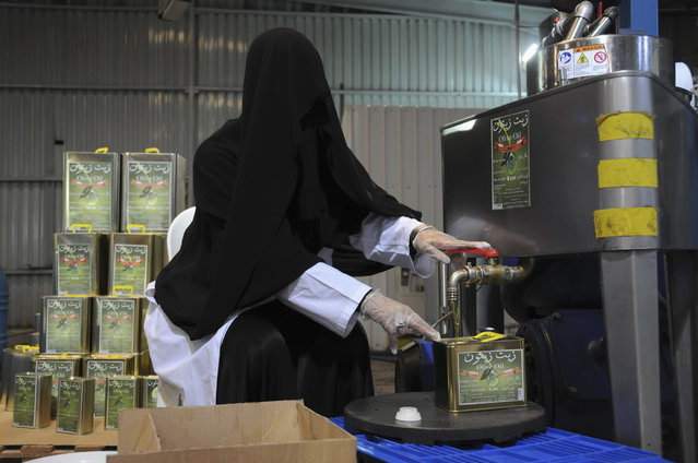 A veiled worker fills a can with olive oil at a factory for pickling olives in Tabuk, October 23, 2013. (Photo by Mohamed Al Hwaity/Reuters)