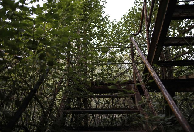 Plants grow over a staircase at the abandoned former Union Carbide pesticide plant in Bhopal November 14, 2014. (Photo by Danish Siddiqui/Reuters)