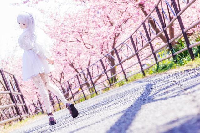"""""""Early spring field"""". Location: Kawazu riverside. (AZURE)"""