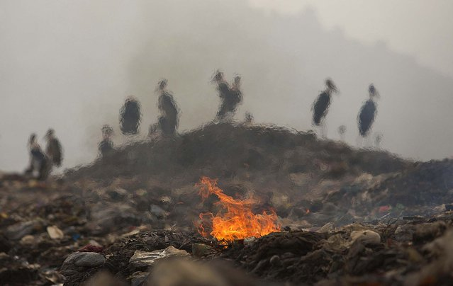 Smoke rising from burning garbage blurs out greater adjutant storks resting at a dumping site on the outskirts of Gauhati, India, Friday, November 14 2014. This week's China-U.S. climate agreement between the world's top two polluters puts pressure on India, No. 3 on the list, to become more energy efficient and should encourage investment in renewable energy. (Photo by Anupam Nath/AP Photo)