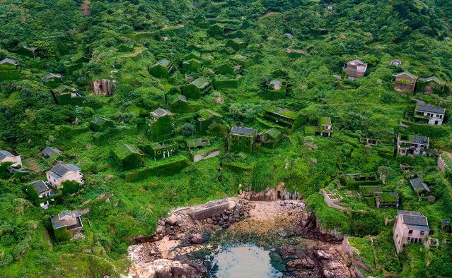 This aerial picture taken on May 31, 2018 shows abandoned village houses covered with overgrown vegetation in Houtouwan on Shengshan island, China' s eastern Zhejiang province. (Photo by Johannes Eisele/AFP Photo)