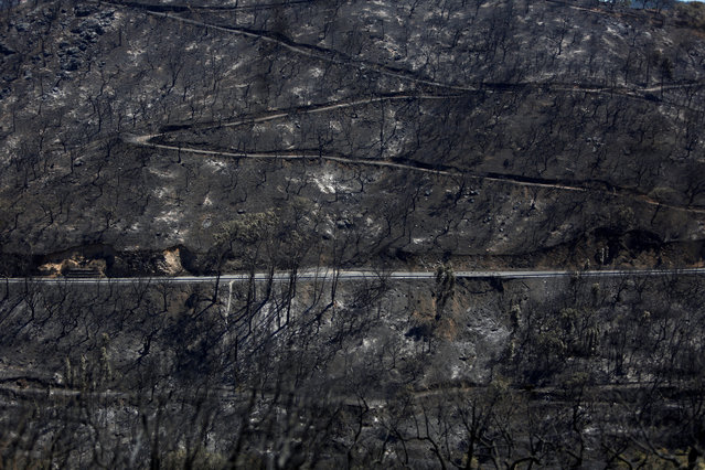 A view of a burned forest next to the village of Monchique, Portugal, August 8, 2018. (Photo by Pedro Nunes/Reuters)