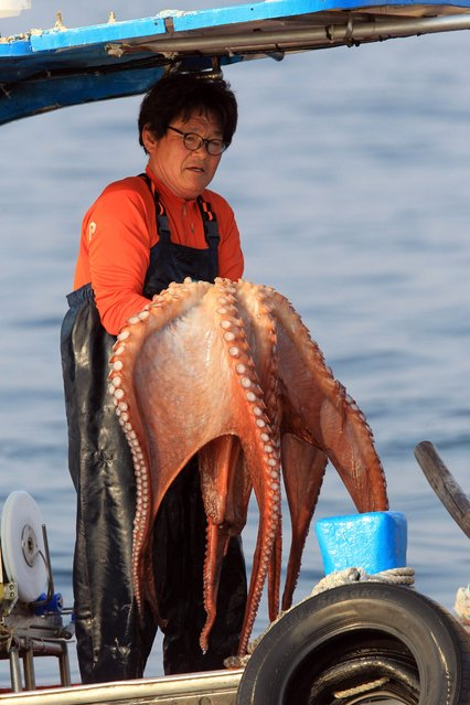 A fisherman shows off an octopus caught in a fishing ground off Jeo Island in the Goseong region of South Korea's east coast, 10 April 2015, as the country's northernmost fishing ground bordering North Korea opened the same day. The Jeo Island fishing ground in the East Sea is open to South Korean fishermen from April to December every year. (Photo by EPA/Yonhap)