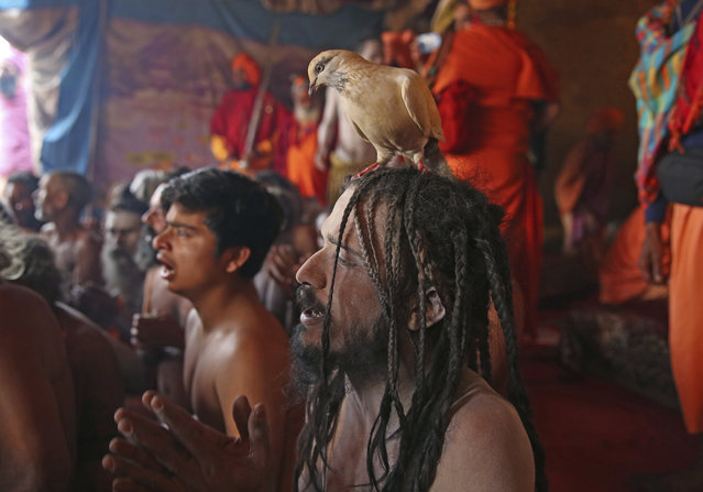 In this January 27, 2019, photo, Hindu holy men of monastic order Juna Akhara participate in a ritual before becoming Naga Sadhus or naked holy men at Sangam, the confluence of three holy rivers during the Kumbh Mela or pitcher festival in Prayagraj Uttar Pradesh state, India. At every Kumbh, including this year's, thousands of devotees were initiated into the reclusive sect of the Naga Sadhus, naked, ash-smeared cannabis-smoking Hindu warriors and onetime-armed defenders of the faith who for centuries have lived as ascetics in jungles and caves. (Photo by Rajesh Kumar Singh/AP Photo)