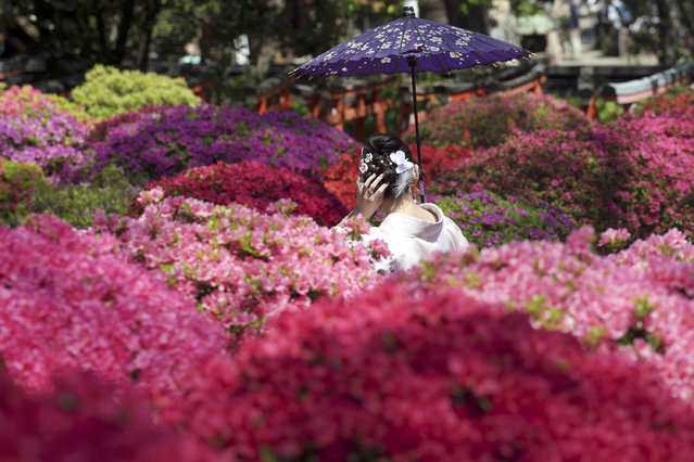 In this Tuesday, April 16, 2019, file photo, a visitor posing for a photo walks though azalea blossoms at Nezu Shrine during a day of mild spring weather in Tokyo. Nezu Shrine is one of the oldest shrines in Tokyo. (Photo by Eugene Hoshiko/AP Photo/File)