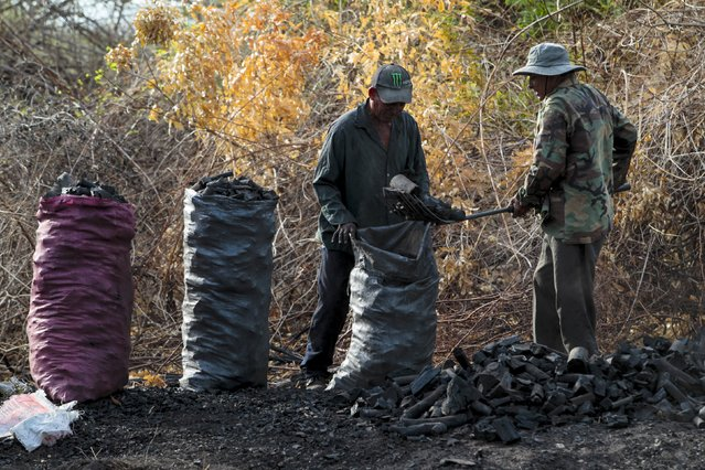 Workers fill bags with coal at a traditional charcoal factory at a village in Nagarote town, Nicargua, May 28, 2015. Around 300 families live off the sale of charcoal in this area located in the dry corridor of Nicaragua. Friday marks World Environment Day. Picture taken May 28, 2015. REUTERS/Oswaldo Rivas