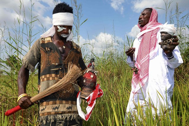 Raka Soko, a traditional healer and Poro society member is deep in prayer while holding a broom and a bottle filled with spiritual wine that is purified to show gratitude to the gods before a ceremony in Waterloo on November 26, 2018. Standing across the field from him another member, Amos Nicol, holds a statue of the spiritual god Sama Yorbu which is used to communicate directly to other gods for permission to perform. (Photo by Lynn Rossi/AFP Photo)