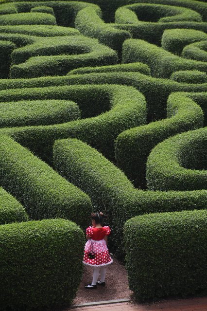 """""""Just stepping into life"""". There is a maze made of hedge in front of the Hong Kong Disneyland Hotel. This 6 years old girl, who came there for a birthday party looked like a fairy tale Alice in Wonderland wondering whether to enter the unknown... Photo location: Disneyland Hotel, Hong Kong. (Photo and caption by Marcin Klocek/National Geographic Photo Contest)"""