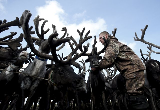 A herder is seen amidst antlers while working with reindeer at a camping ground, some 200 km (124 miles) northeast of Naryan-Mar, the administrative centre of Nenets Autonomous Area, far northern Russia, August 2, 2015. (Photo by Sergei Karpukhin/Reuters)