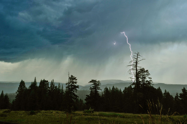 In this photo taken on Tuesday, July 22, 2014, lightning from one of many eastern Oregon and Washington thunderstorms crackles over the mountains just south of Tollgate, Ore. (Photo by Greg Lehman/AP Photo/Walla Walla Union-Bulletin)
