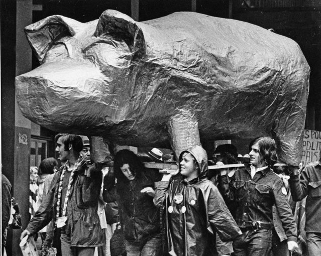 Demonstrators carry a large papier mache pig past the federal courthouse as the trial got underway for eight people accused of conspiring to riot during the 1968 Democratic National Convention in Chicago, September 24, 1969. (Photo by AP Photo)