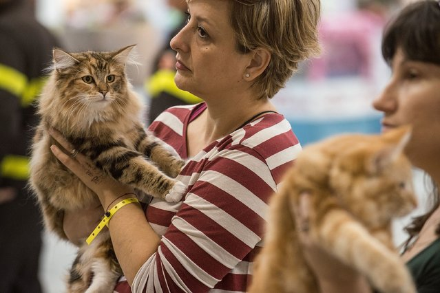 Cats are in the arms of their owners during the first day of the Super Cat Show 2014, on November 8, 2014 in Rome, Italy. (Photo by Giorgio Cosulich/Getty Images)