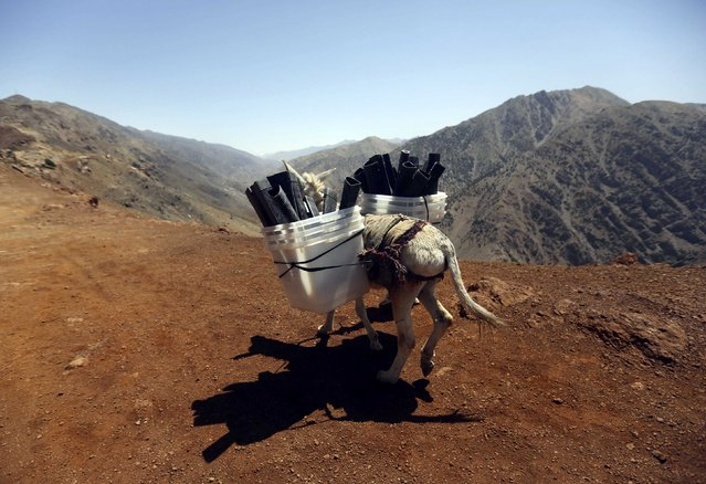 A donkey transports ballot boxes and other election material on to polling stations which are not accessible by road in Shutul, Panjshir province, in this June 13, 2014 file photo. (Photo by Omar Sobhani/Reuters)