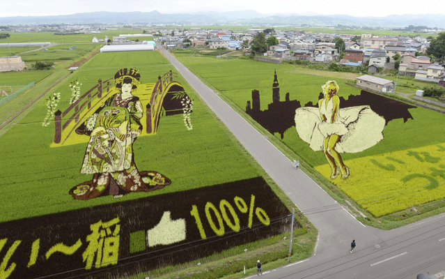 Rice fields in Inakadate town, Aomori, in northern Japan, depict film star Marilyn Monroe and a traditional Japanese courtesan, on July 19, 2013. The annual event, which sees different kinds of rice planted to create a giant picture, is known at Tanbo art. (Photo by Reuters/Kyodo)